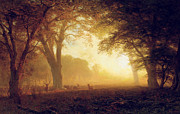 Fawn Prints - Golden Light of California Print by Albert Bierstadt