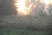 Richard De Wolfe - Golden Light on Queen Anne Lace