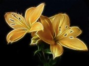Fractalius Framed Prints - Golden Lilies Framed Print by Sandy Keeton