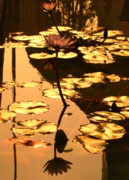 Lotus Leaves Posters - Golden Lotus Pond Poster by Yali Shi