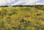 Plants Wildflowers Prints - Golden Meadow Print by Marsha Elliott