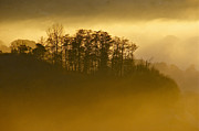 Landscape - Golden Morning Mist by Sean Griffin