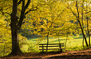 Golden October Posters - Golden October - bench and yellow trees in fall Poster by Matthias Hauser