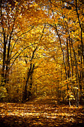 Yellow Leaves Prints - Golden Path Print by Kamil Swiatek