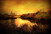 Golden Pond Framed Prints - Golden Pond Framed Print by Photodream Art