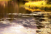 Golden Pond Prints - Golden Pond Print by The Forests Edge Photography - Diane Sandoval