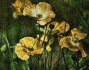 Hunter Green Prints - Golden Poppies Print by Bonnie Bruno
