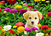 Zinnias Posters - Golden Puppy in the Zinnias Poster by Bob Nolin