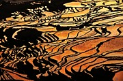 Rice Paddy Prints - Golden Reflection On Terrace Pattern Print by MelindaChan