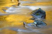 Creek Art - Golden Refuge by Mike  Dawson