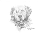Mammals Jewelry Posters - Golden Retriever Poster by Jim Hubbard