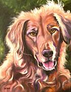 Animal Greeting Cards Drawings Posters - Golden Retriever More Than You Know Poster by Susan A Becker