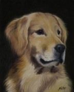 Jindra Noewi - Golden Retriever Nr.4