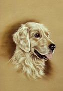 Golden Retriever Art Pastels Prints - Golden Retriever Print by Patricia Ivy