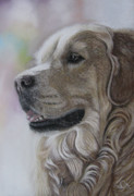 Romance Pastels Posters - Golden Retriever Poster by Sabine Lackner