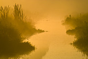 Water Plants Photos - Golden Riverside by Heiko Koehrer-Wagner