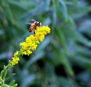 Signed Digital Art Posters - Golden Rod and Honey Bee Poster by Suzanne  McClain