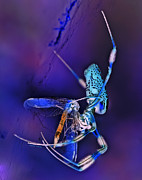 Dragonfly Framed Prints - Golden Silk Orb with Blue Dragonfly Inverted Framed Print by DigiArt Diaries by Vicky Browning