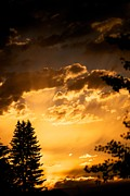 Sunset Framed Prints Metal Prints - Golden Sky Metal Print by Kevin Bone