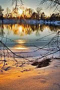 Golden Snow Print by Robert Pearson