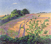 Cornfield Paintings - Golden Summer by Robert Tyndall
