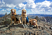 Goldens Framed Prints - Golden Summit Framed Print by Kara Kincade
