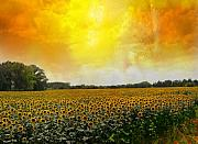 Carver Kearney - Golden Sunflowers of...
