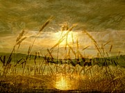 Saint Jean Art Gallery Posters - Golden Sunset Poster by Barbara St Jean