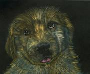 Puppy Mixed Media Originals - Golden Sunshine by Jessica Kale