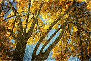 Textured Photo Framed Prints - Golden Tree Framed Print by Bonnie Bruno