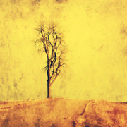 Rustic Art Prints - Golden Tree Print by Julie Hamilton