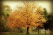 Indiana Autumn Art - Golden Tree by Sandy Keeton