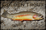 Golden Fish Framed Prints - Golden Trout Framed Print by Kelley King