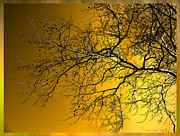 Golden Mixed Media Framed Prints - Golden Walnut Tree Framed Print by Heinz Mielke