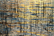 Sunset Canvas Art Framed Prints - Golden Water Lines and Ripples Framed Print by James Bo Insogna
