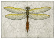 Golden Mixed Media Framed Prints - Golden Winged Skimmer Framed Print by Charles Harden