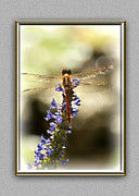 Dragonflies Metal Prints - Golden Wings Metal Print by Carolyn Marshall