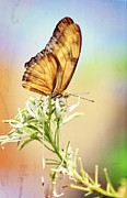 Julia Butterfly Acrylic Prints - Golden Wings  Acrylic Print by Saija  Lehtonen
