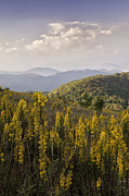 Max Prints - Goldenrod at Max Patch Print by Rob Travis
