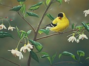 Seasonal Painting Acrylic Prints - Goldfinch and Snowbells Acrylic Print by Peter Mathios