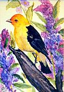 Gail Kirtz Prints - Goldfinch Print by Gail Kirtz