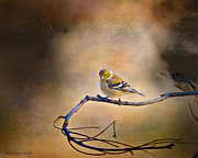 Layered Digital Art Prints - Goldfinch In Deep Thought Print by J Larry Walker
