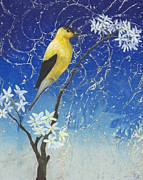 Goldfinch Drawings - Goldfinch by Sara Bell
