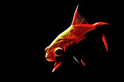 Goldfish Digital Art Prints - Goldfish 2 Print by Tilly Williams