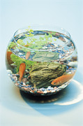 Fish Tank Prints - Goldfish In A Bowl Print by David Aubrey