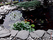 Pond Art - Goldfish Pond by Sondra Faye