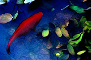 Goldfish Digital Art Prints - Goldfish Print by Ron Jones