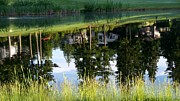 Fir Trees Photo Originals - Golf Course Reflections 3 by Tanya  Searcy