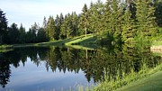 Fir Trees Photo Originals - Golf Course Reflections by Tanya  Searcy