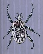 Insects Originals - Goliath Beetle by Mindy Lighthipe